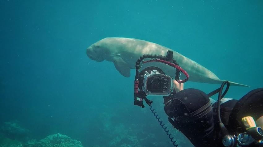 Eine Unterwasserkamera kaufen
