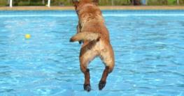 Der Hundepool im Vergleich