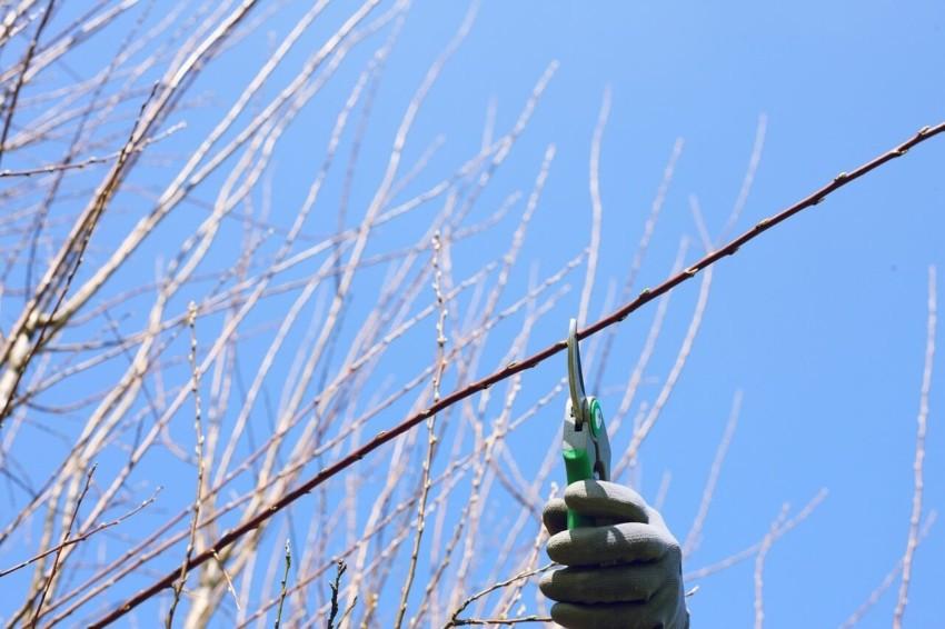 Die elektrische Gartenschere im Test