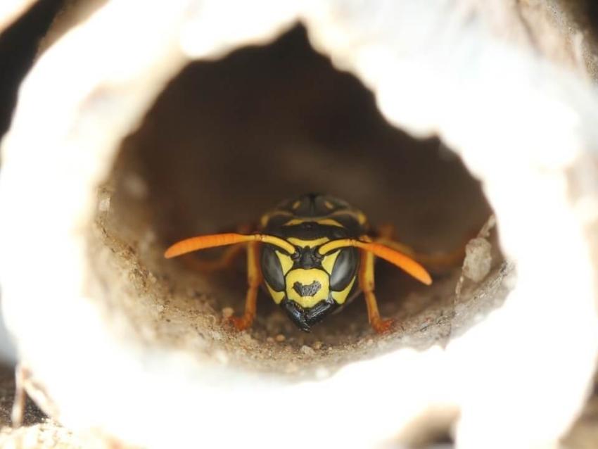 Die Insektenhotel Bewohner im Überblick
