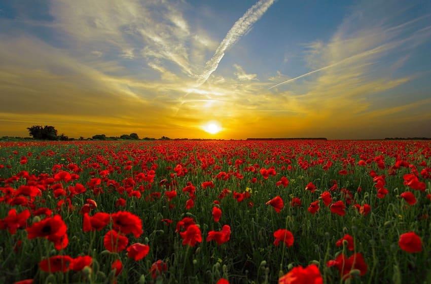 Ein Sonnenaufgang bei einem Mohnfeld