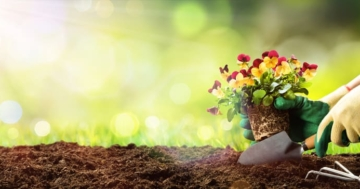 Die Compo Sana Blumenerde im großem Test