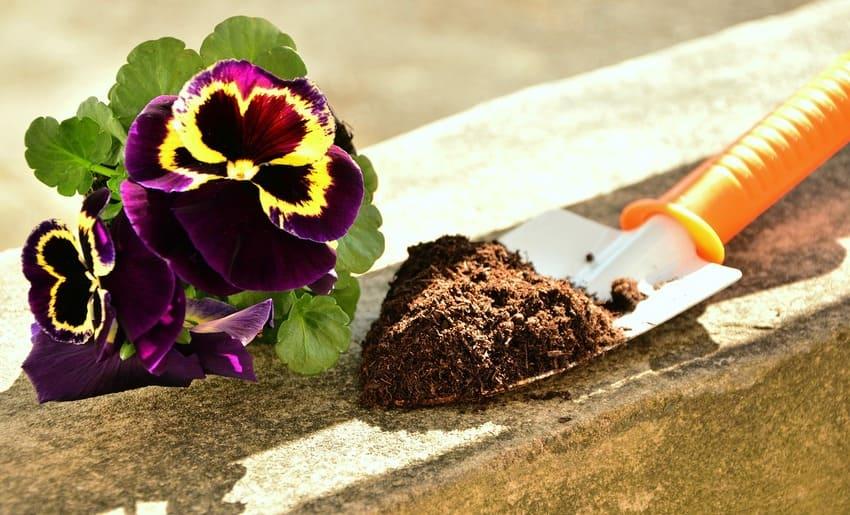 Die Floragard Blumenerde wird getestet