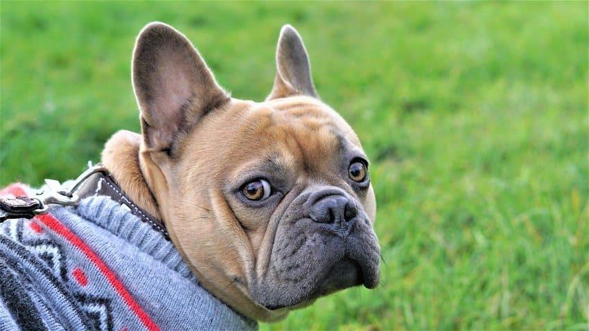 Eine Hundeleine für große Hunde im Test