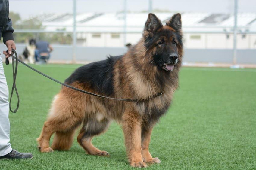 Eine Leder Hundeleine im Test