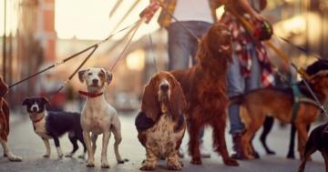 Viele Hunde die Hundeleinen testen