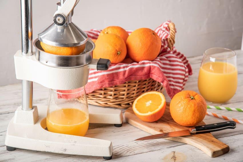Unser Orangenpressen Testsieger