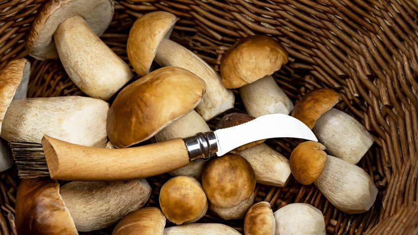 Ein Pilzmesser mit einer hochwertigen Bürste