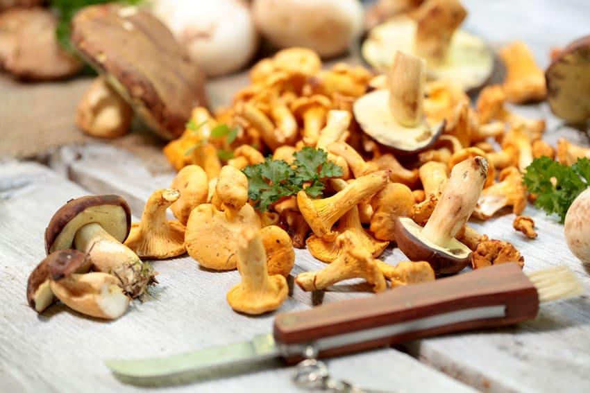 Das Pilzmesser mit verschiedenen Pilzen